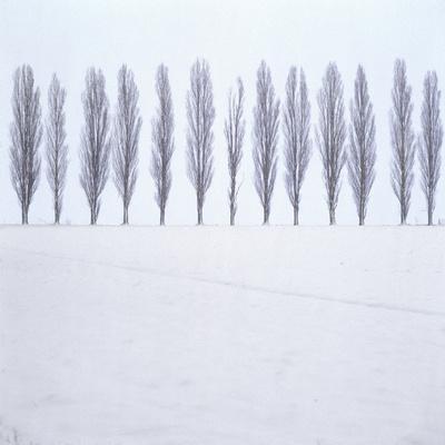 Landscape, Row of Trees, Winter