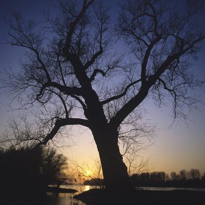 River, Sundown, the Sun, Tree, Silhouette, Trees, Silhouette, Bald, Dusk, Colour