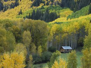 Log Cabin in Fall Colors, Dolores, San Juan National Forest, Colorado, USA by Rolf Nussbaumer