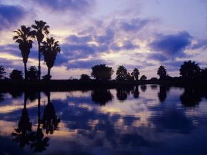 Palm Trees at Sunset, Rio Grande Valley, Texas, USA by Rolf Nussbaumer