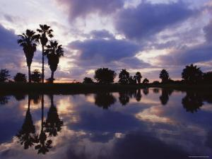 Palm Trees Silhouetted by Water at Sunset, Texas, USA by Rolf Nussbaumer