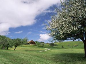 Traditional Farmhouse and Apple Tree in Blossom, Unteraegeri, Switzerland by Rolf Nussbaumer