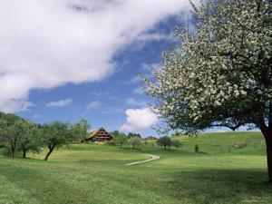 Traditional Farmhouse and Apple Tree in Blossom, Unteraegeri, Switzerland by Rolf Nussbaumer
