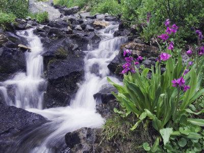 Waterfall and Wildflowers, Ouray, San Juan Mountains, Rocky Mountains, Colorado, USA