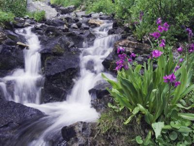 Waterfall and Wildflowers, Ouray, San Juan Mountains, Rocky Mountains, Colorado, USA