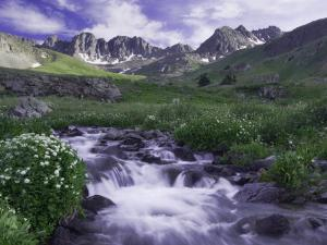 Wildflowers, Ouray, San Juan Mountains, Rocky Mountains, Colorado, USA by Rolf Nussbaumer