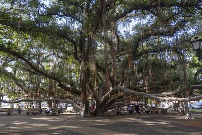 Banyan Tree, Lahaina, Maui, Hawaii, United States of America, Pacific by Rolf Richardson