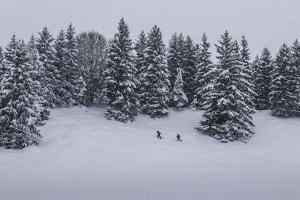 Snowfall, Ski Tourer in Front of a Winter Wood at the Kranzberg at Mittenwald, Wetterstein Range by Rolf Roeckl
