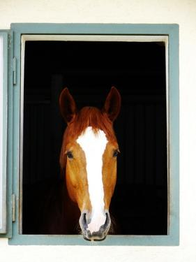 Horse by rolfo