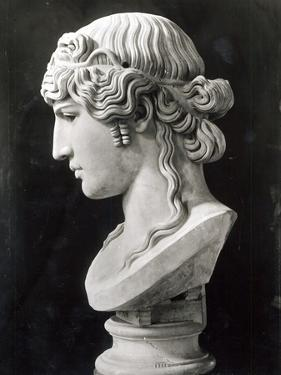 Bust of Antinous by Roman