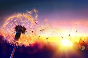 Dandelion to Sunset - Freedom to Wish by Romolo Tavani