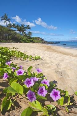 Palau'Ea Beach, Maui, Hawaii by Ron Dahlquist