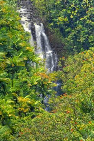 Rainforest around Nanue Falls on Hawaii Island by Ron Dahlquist
