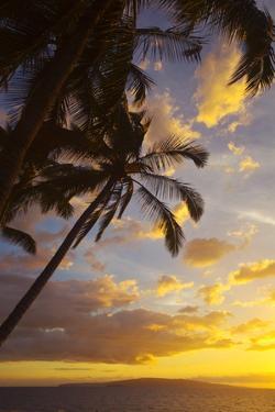 Sunset with Palm Trees in Kihei, Maui, Hawaii by Ron Dahlquist