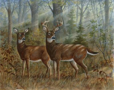 Deer Family II