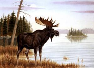 The Mighty Moose by Ron Jenkins