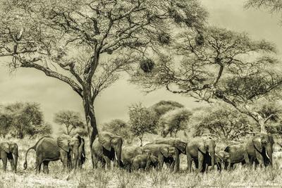 Elephant Eruption