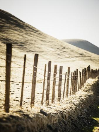 Old Wire Barbed Wire Fencing In The Afternoon Sun Along Panoche Road In San Benito County