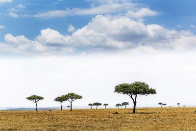 Panoramic Prairie