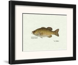 Smallmouth Bass Fish by Ron Pittard