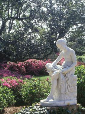 Middleton Gardens, Charleston, SC by Ron Rocz
