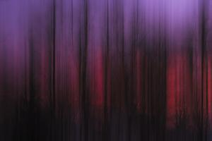 Abstract of Trees at Sunset, Upper Mississippi, Le Claire Iowa by Rona Schwarz