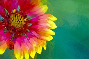 Artistic Rendition of Indian Blanket Flower by Rona Schwarz