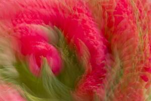 Multiple-Exposure of Bouquet of Red Tulip Flowers by Rona Schwarz