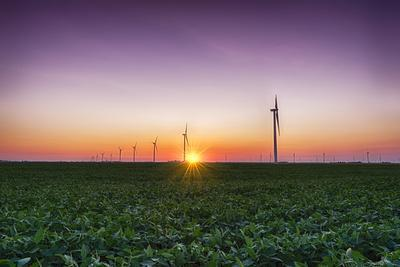 USA, Indiana. Soybean Field and Wind Farm at Sundown