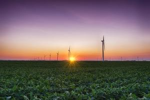 USA, Indiana. Soybean Field and Wind Farm at Sundown by Rona Schwarz