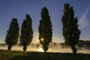 River Scenery, the Rhine, Trees, Nebulous Mood, Sunrise, Speyer, Rhineland-Palatinate, Germany by Ronald Wittek