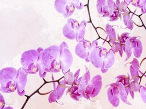 Fluttering Orchid I by Roozbeh