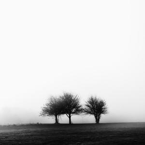 3 Trees in Fog by Rory Garforth