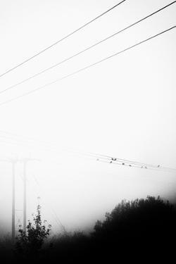 Birds On the Wire by Rory Garforth