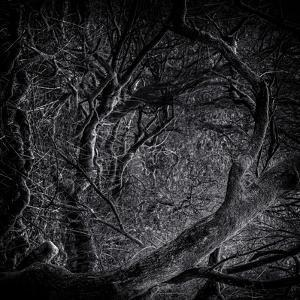 Close Up of Trees by Rory Garforth