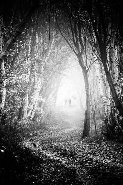 Fog Walkers in Forest by Rory Garforth