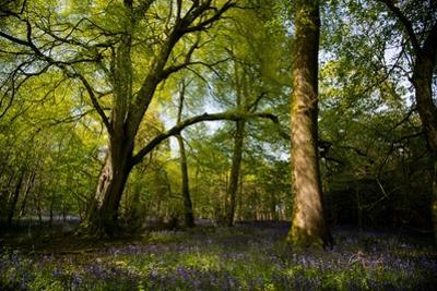 Sunlight in Spring Woodland by Rory Garforth