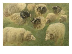 Béliers et moutons à tête noire, 10 esquisses by Rosa Bonheur