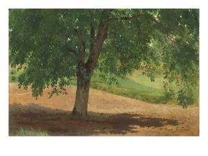 Study of Light and Shade (Oil on Card Laid Down on Canvas) by Rosa Bonheur