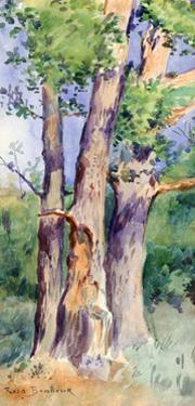 Study of Trees, C1842-1899 by Rosa Bonheur