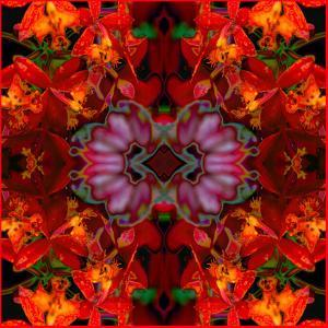 Fire Orchids by Rose Anne Colavito
