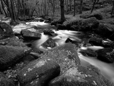 Golitha Falls, Bodmin, Cornwall, UK by Ross Hoddinott