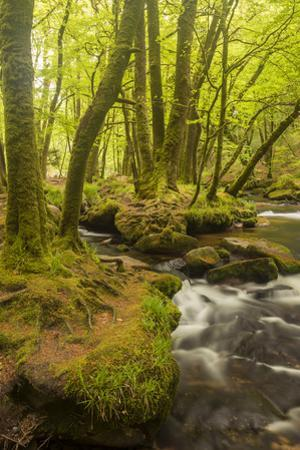 Golitha Falls, River Fowey Flowing Through Wooded Valley, Near St Cleer, Cornwall, UK, May 2012 by Ross Hoddinott