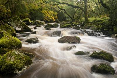 River Plym Flowing Fast Through Dewerstone Wood, Shaugh Prior, Dartmoor Np Devon, UK, October