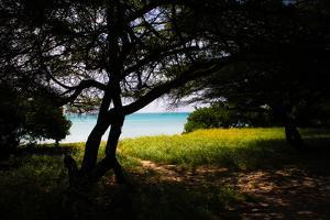Aruba by Ross Sheddon