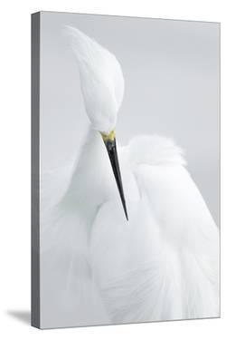 White Beauty by Rostislav Kralik