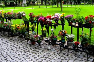 Row of Flowers in Sweden Photo Print Poster