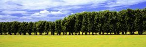 Row of Trees, Uppland, Sweden