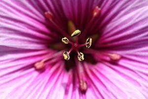 Flower Macro by Rowan Castle