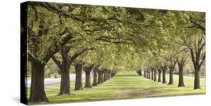 Rows of trees bordering greensward (detail)